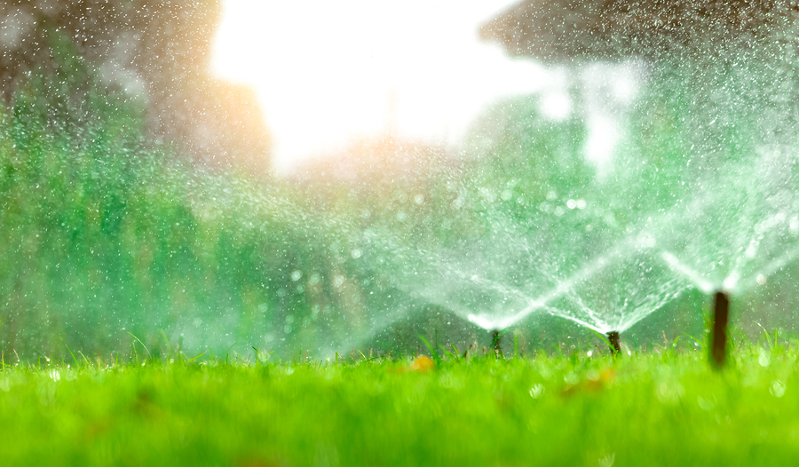 Automatic Lawn Sprinkler Watering Green Grass. Sprinkler With Au